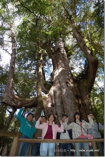 司馬庫斯-day2-巨木7合照