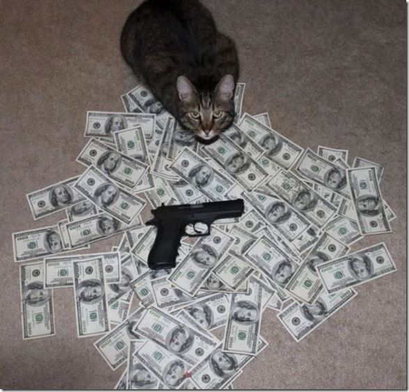 rich-wealthy-cats-9