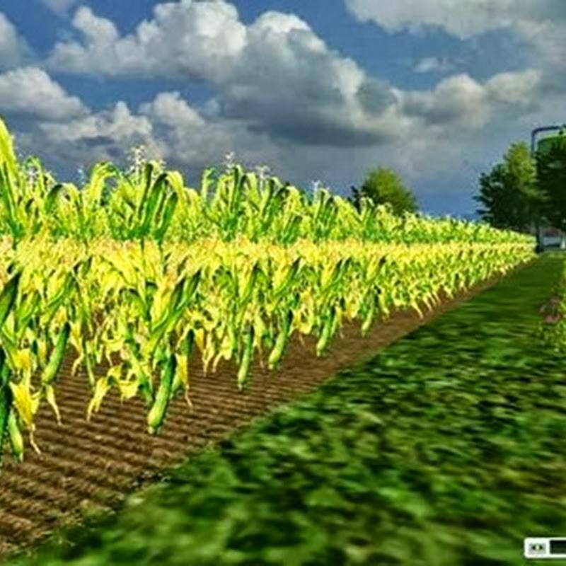 Farming simulator 2013 - Texture Mais V 1.0