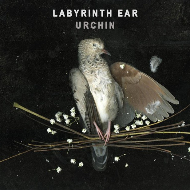 labyrinth ear - urchin