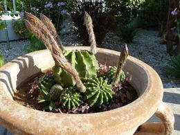 kaktus_04