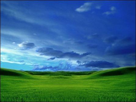 ws_Longhorn_field_2_1024x768 (1)