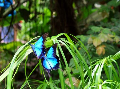 2013-07-05 butterfly pavilion (124)