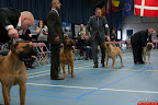 20130510-Bullmastiff-Worldcup-0524.jpg
