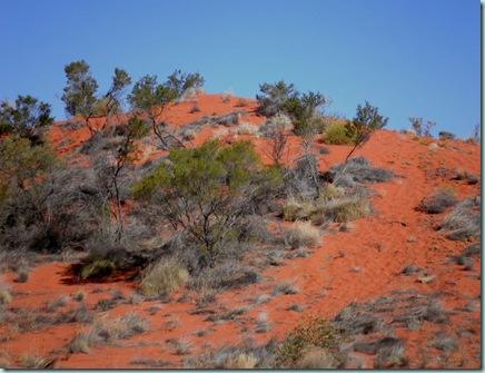 Simpson Desert dunes