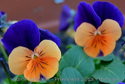 Glória Ishizaka - Primavera 2013 - 2