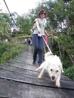 Dogs Trekking 4 (105)