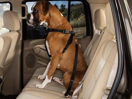 harness-dog-car-safety-seat-belt-1