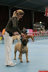 20130510-Bullmastiff-Worldcup-0750.jpg