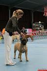 20130510-Bullmastiff-Worldcup-0750.jpg