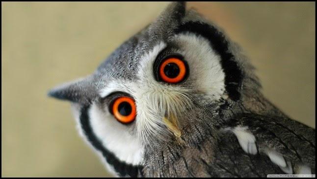 Buho ojos naranjas
