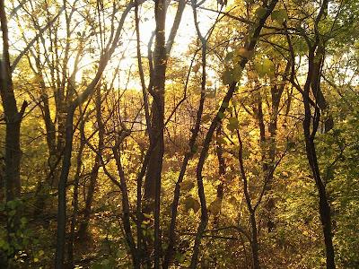 黄色一色の林