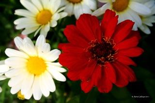 Wild_Red_Flower