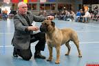 20130511-BMCN-Bullmastiff-Championship-Clubmatch-2221.jpg
