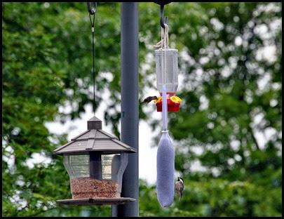 01 - birds - feeder