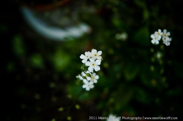 Nature_Portfolio_02_June11