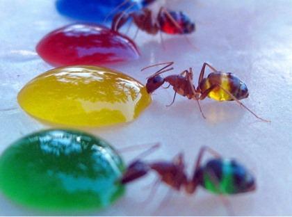 translucent-ants-3