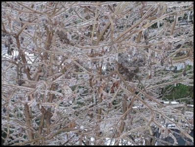 Ice_Storm_2-12-2014