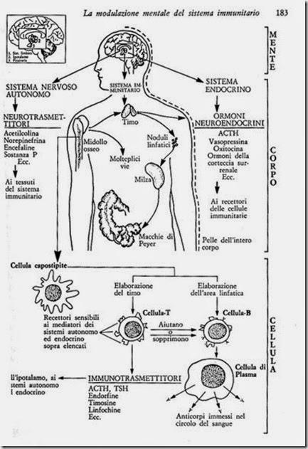 mantra azione su pituitaria ipotalamo talamo