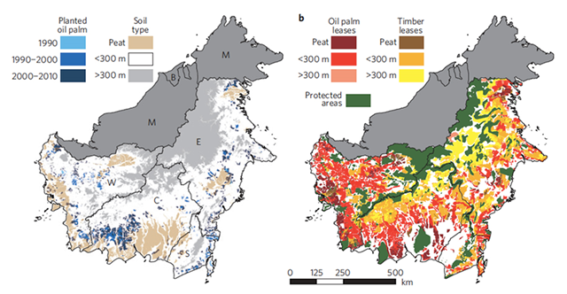Planted oil palm, oil palm leases, timber leases, and protected areas in Kalimantan. Carlson, et al., 2012