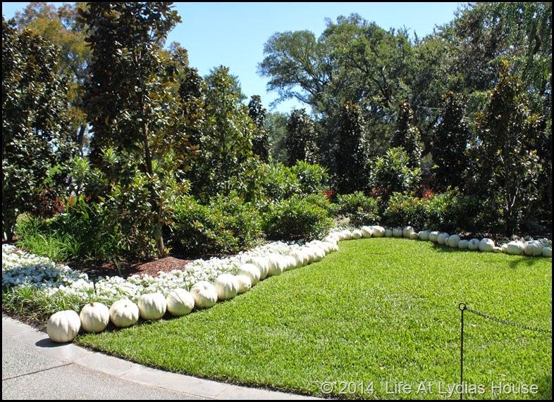 Dallas Arboretum - pumpkin festival-white garden 4