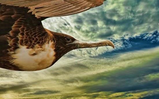 Bird 298401 640