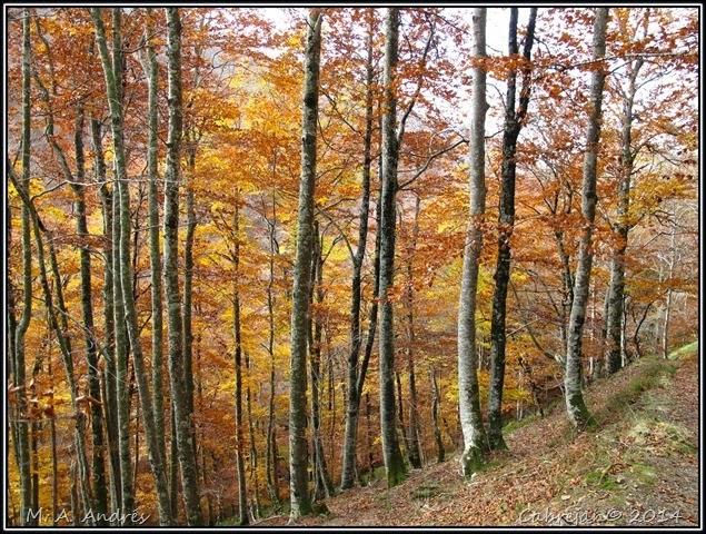 Lantz otoño 054