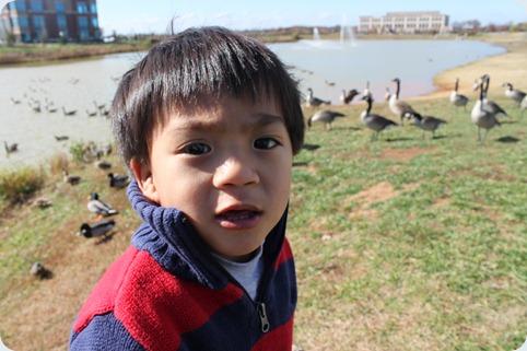 ducks 018