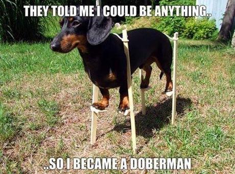 became a doberman