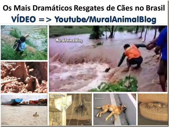Os Mais Dramáticos Resgates de Cães no Brasil