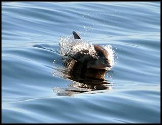 01b - Dolphin