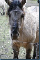 2011-11-28 Wildwood 094
