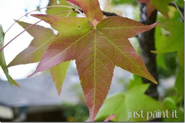 Fall-Foliage-A