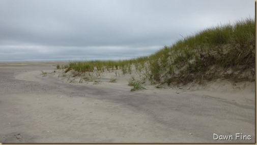 south beach bird trip_037