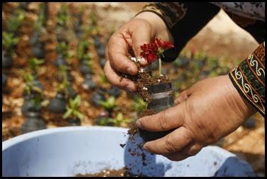 Dai lacrimogeni nascono fiori.. (2)