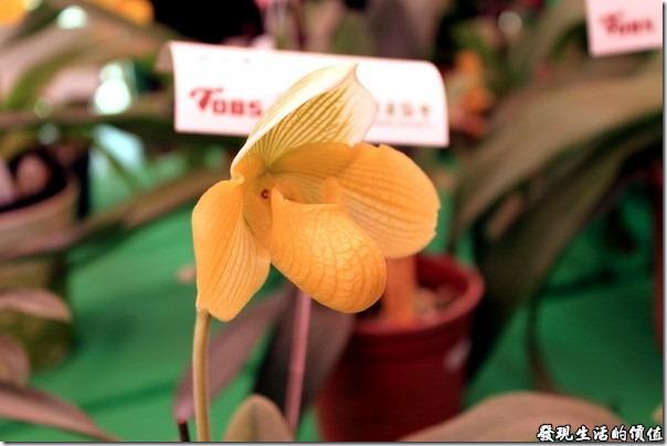 2012台南蘭花展09