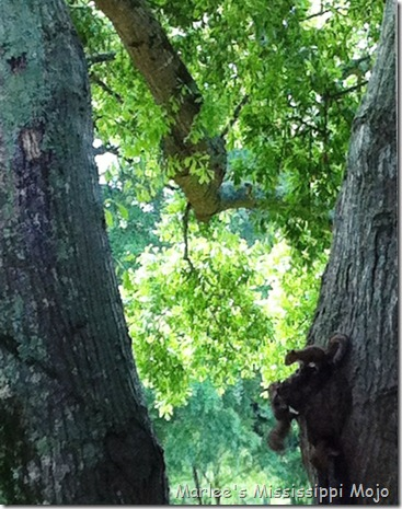 squirrels3