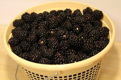 blackberry-vanilla-jam03