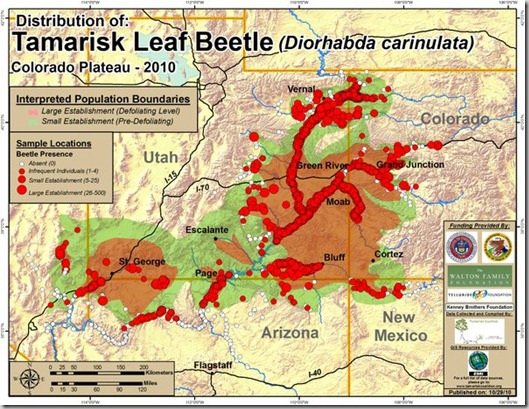 tamarisk beetle distribution map 2010