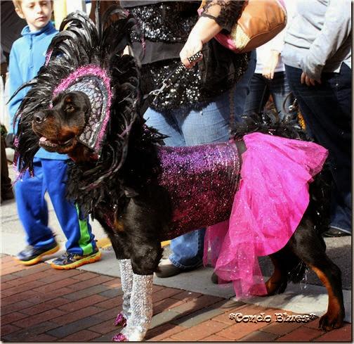 Rottweiler Showgirl Halloween Dog Costume