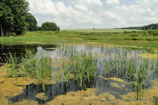 Amur bílý -traviny.jpg