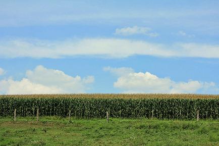 grantsville cornfield