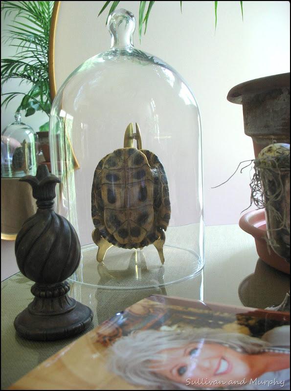 cloche,turtle shell