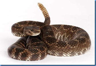Southern-Pacific-Rattlesnake-jpgr