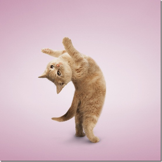 yogacats4