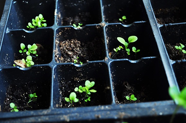 seedlings-4