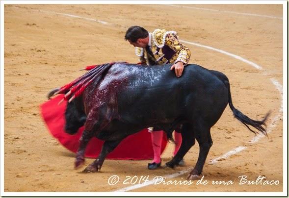 Toros 2014 (1)-19