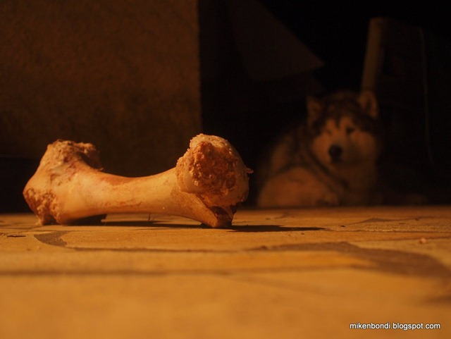 The price of a bone is nocturnal vigilance