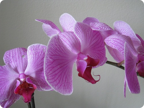 orchid_athomewithh
