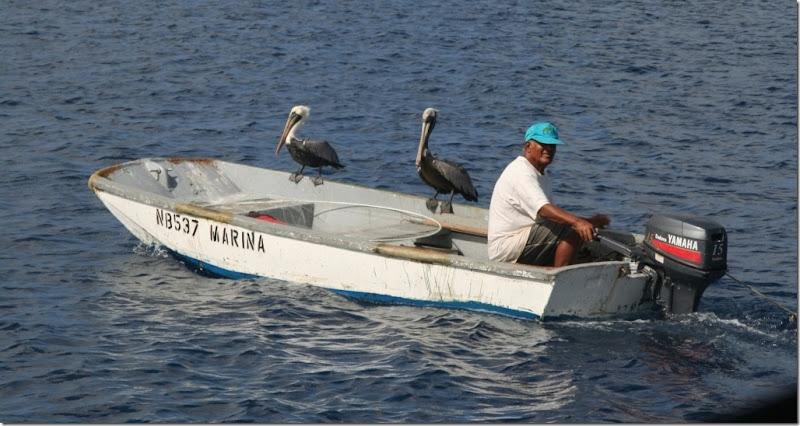 024a pelikantaxi